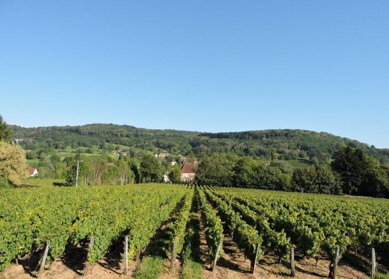 Route touristique du vignoble du jura