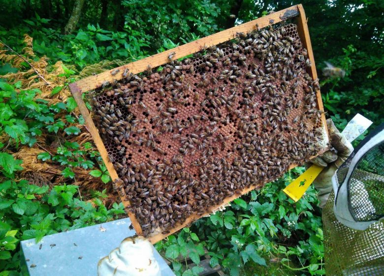 Découverte de l'apiculture au rucher du Djé